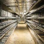 Кабельный тоннелКабельный тоннель. фото: Elektrilevi