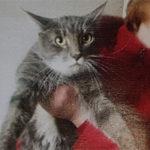 На улице Раадику в Ласнамяэ найден молодой кастрированный кот