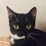 В районе улицы Паэ потерялась кошка черно-белого окраса